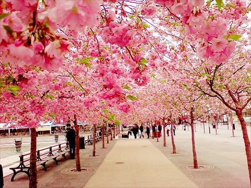 Sakura Garden Find Your Happiness Life